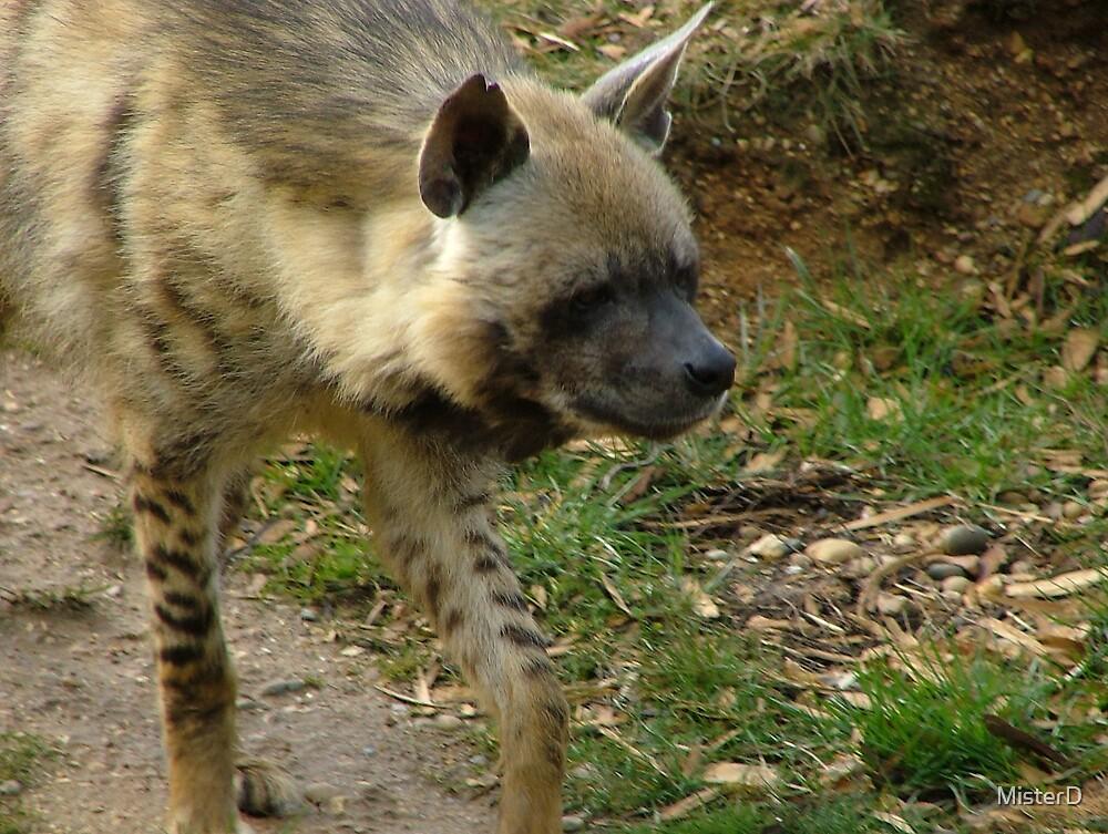 Hyena by MisterD