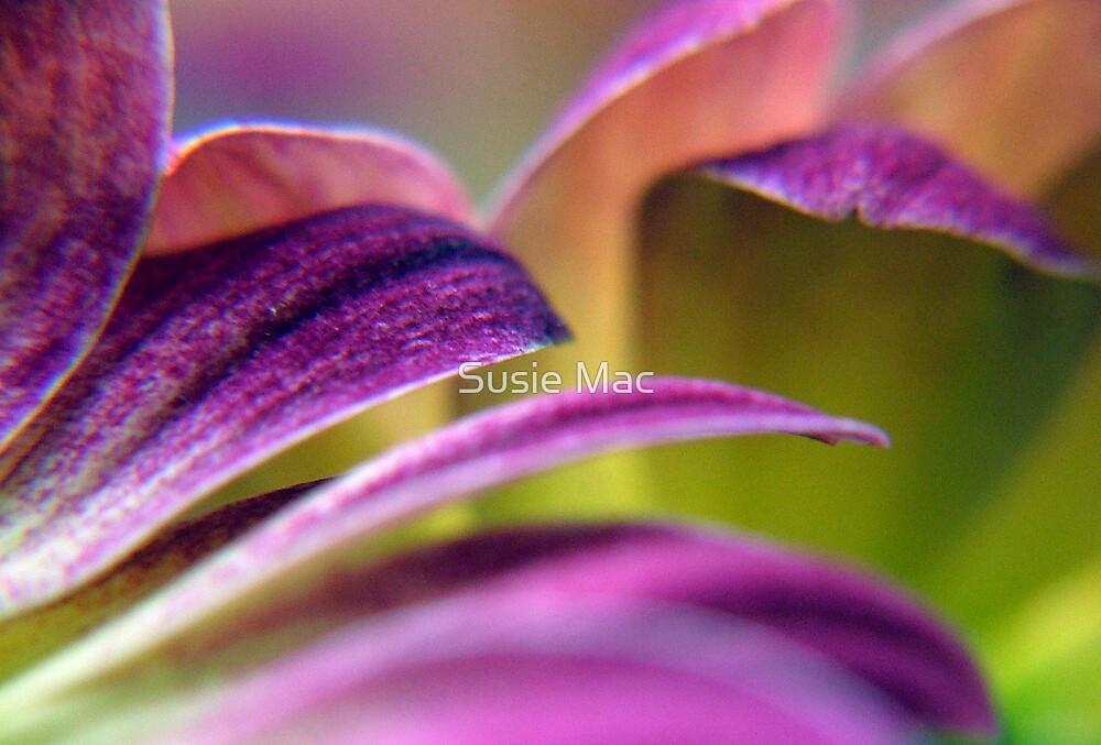 daisy by Susie Mac