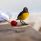 Bananaquit - Antiguan yellow breasted sugar bird by Mark Baldwyn