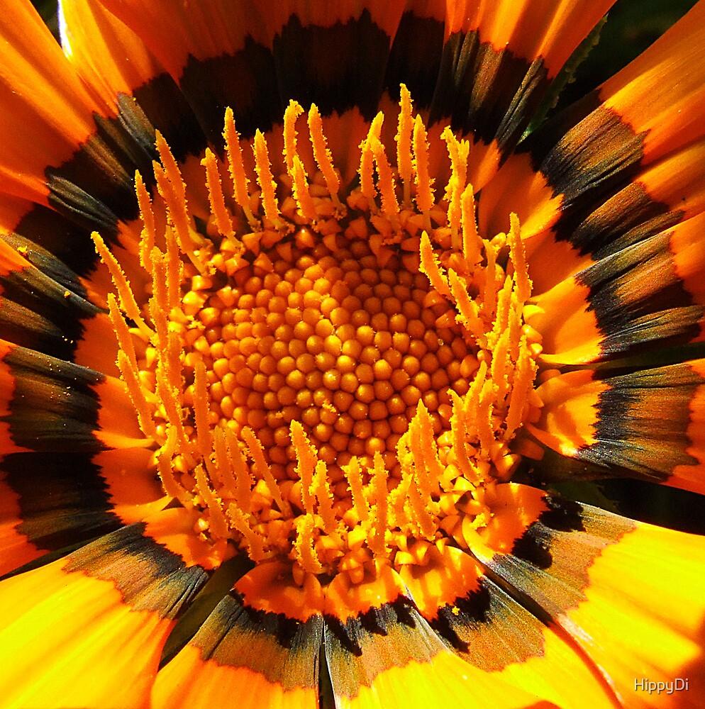 Orange Gazania by HippyDi