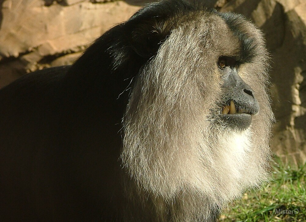 Primate by MisterD