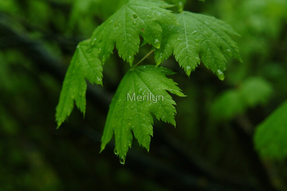 Green Leaves by Merilyn