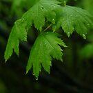 Green Leaves by Merilyn