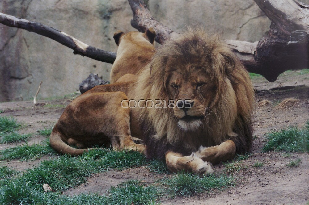 KING OF THE ZOO by COCO21805