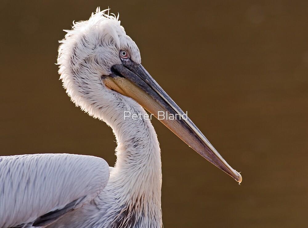 Pelican by Peter Bland