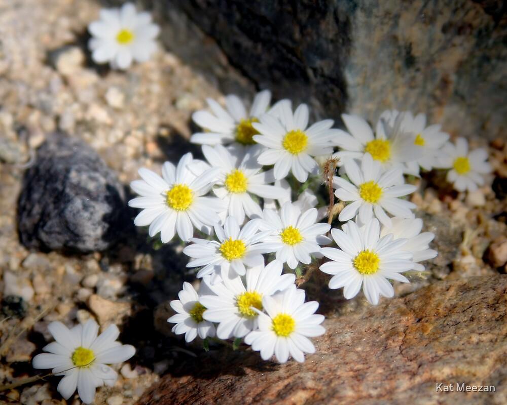 Tiny white flowers by Kat Meezan