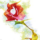 A ROSE FOR YOU by J Velasco