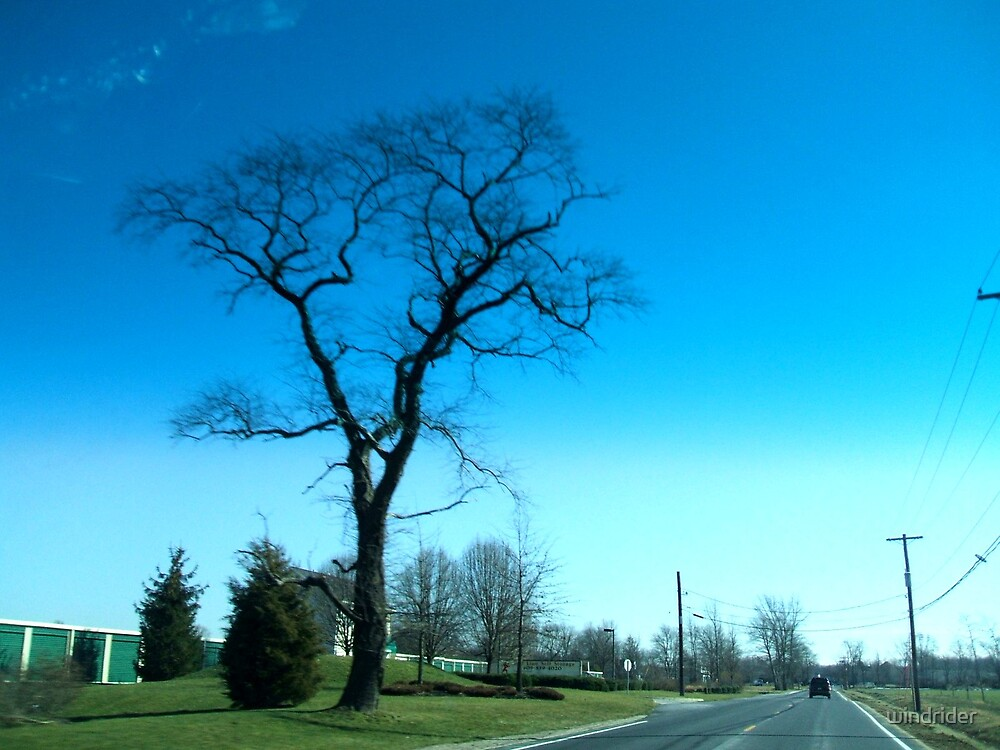 Bare tree and blue sky by windrider