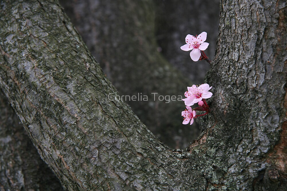 flower tree by Cornelia Togea