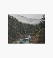 River in the Forest Art Board