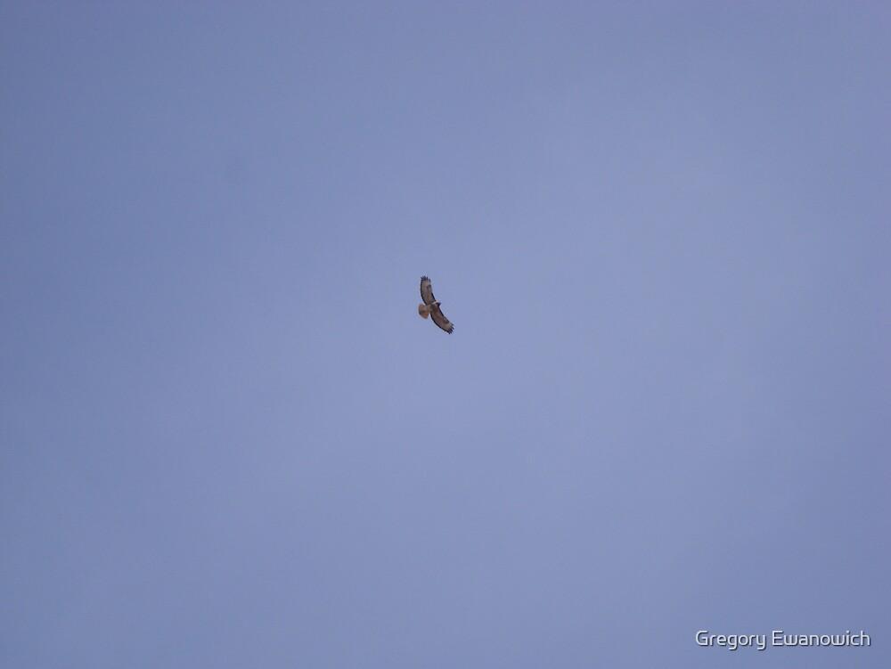 Golden Eagle by Gregory Ewanowich