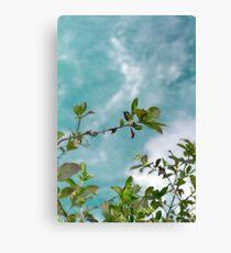 Aquatic Foliage Canvas Print