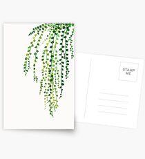 Green string of pearls ink illustration botanical nature Postcards
