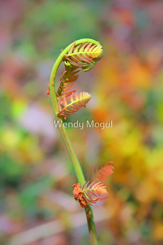 Ferns Beginning by Wendy Mogul