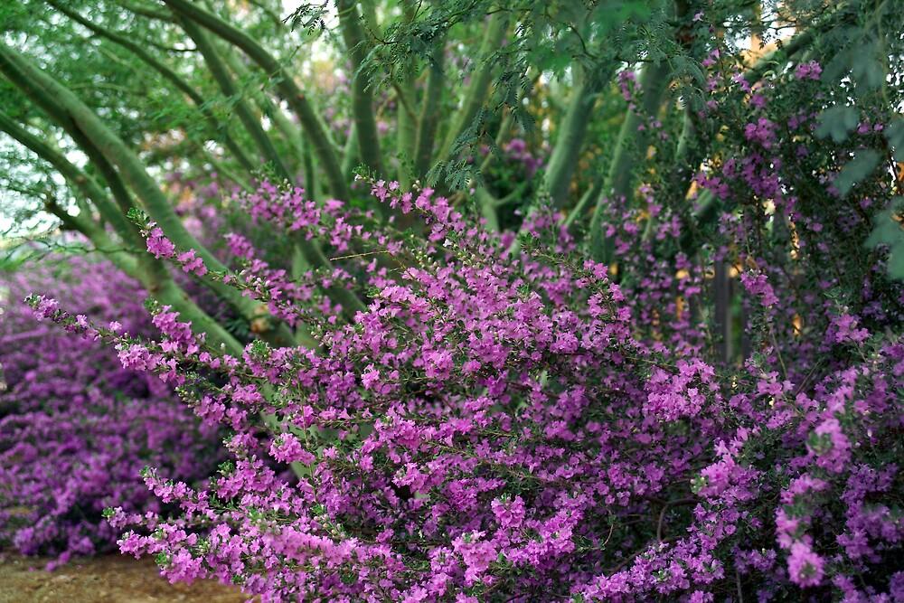 Purple Passion II by Dennis Begnoche Jr.