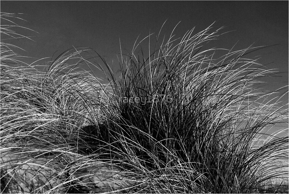 Dune Grass by racey1876