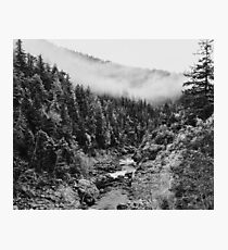 Black & White River in the Forest Photographic Print