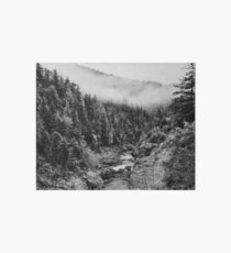 Black & White River in the Forest Art Board