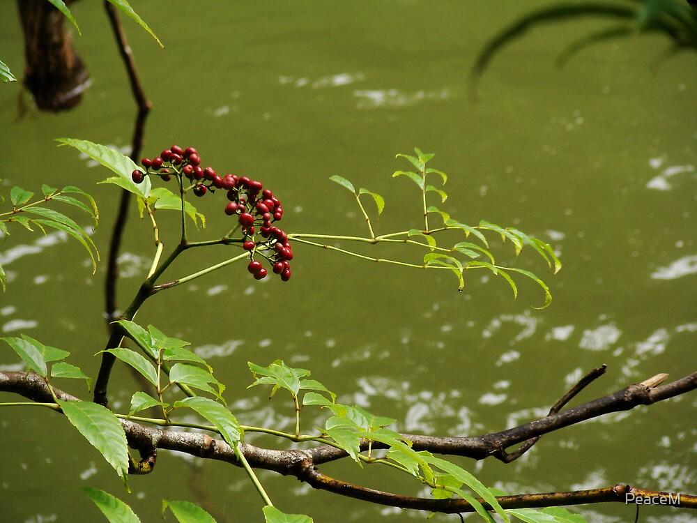 rainforest stream by PeaceM