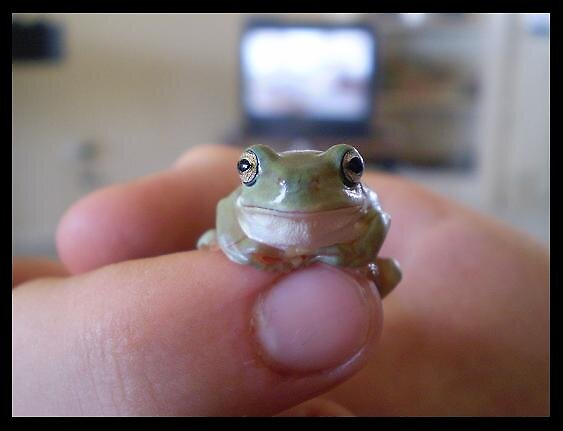 Froggie -3- by elizabethrose05