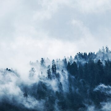 Misty Forest by PhotoStore