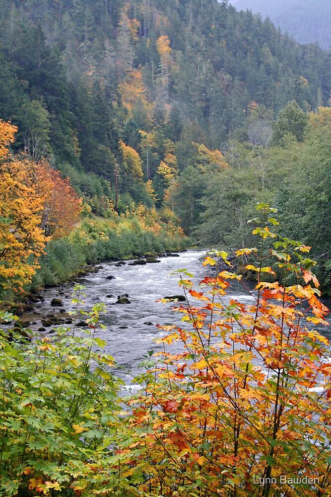 Autumn Along the Elwha River by Lynn Bawden