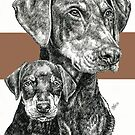 Doberman (uncropped), Father & Son by BarbBarcikKeith