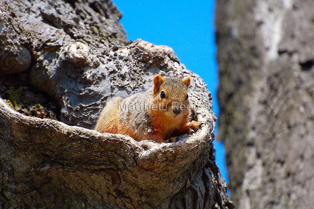 City Squirrel by Matthew Reed