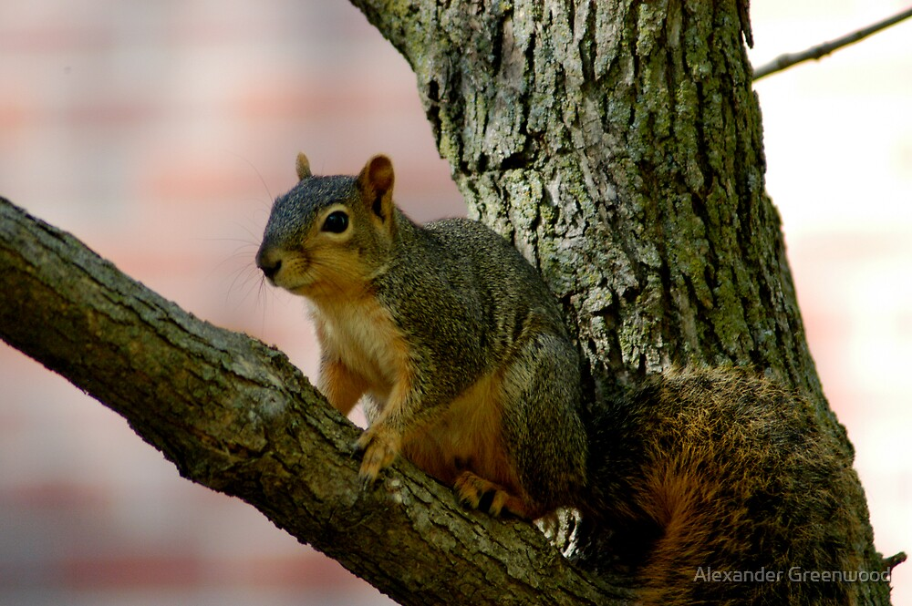 I'm Just A Squirrel in the World by Alex Greenwood