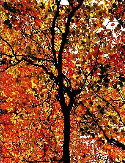 orange tree ... by SNAPPYDAVE