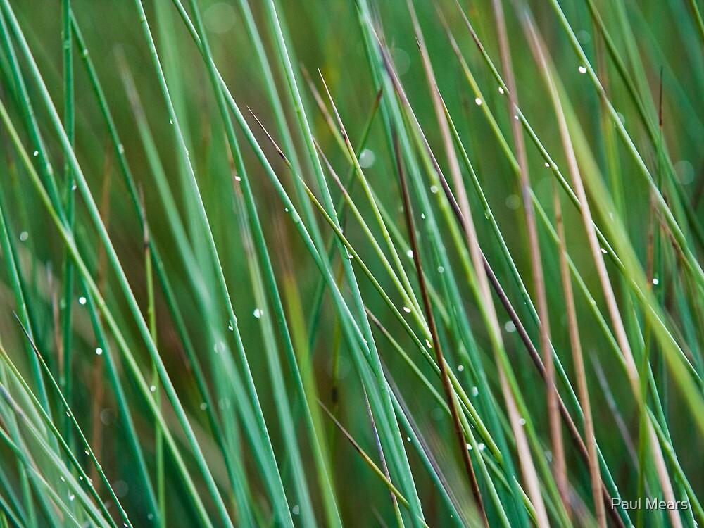 Wetland Grass by Paul Mears