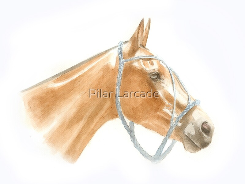 Polo Pony by Pilar Larcade