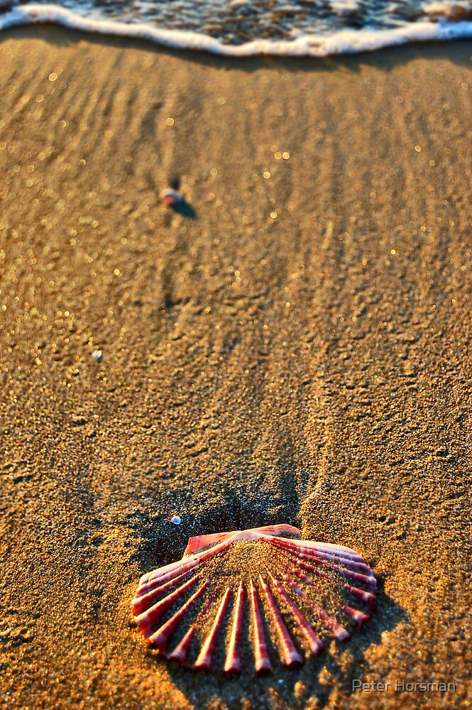 All Washed Up by Peter Horsman