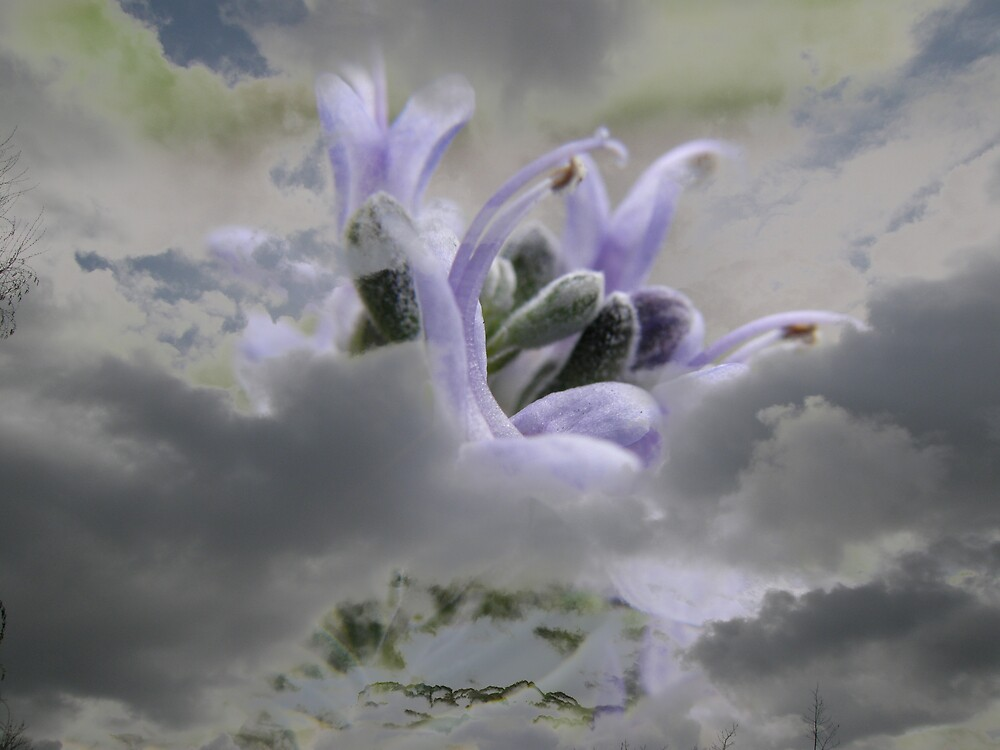 Rosemary Clouds by FlickerLightStudio