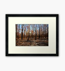 Blackened trees and bushland after bushfire Framed Print
