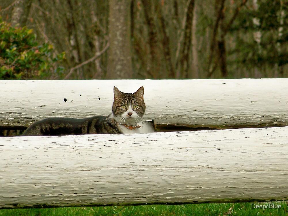 Sneaking a Peek by DeeprBlue
