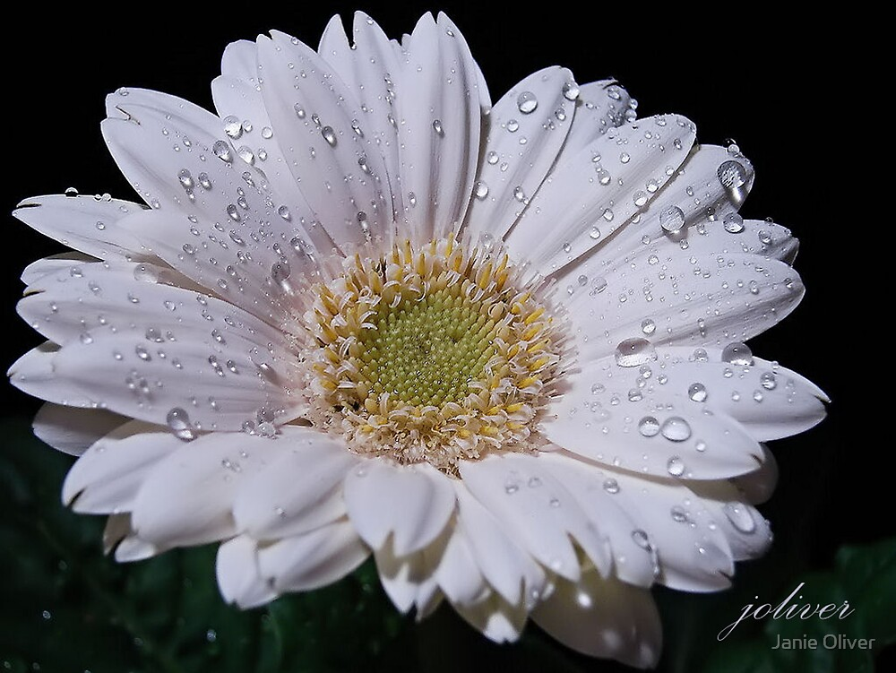 White and Wet by Janie Oliver