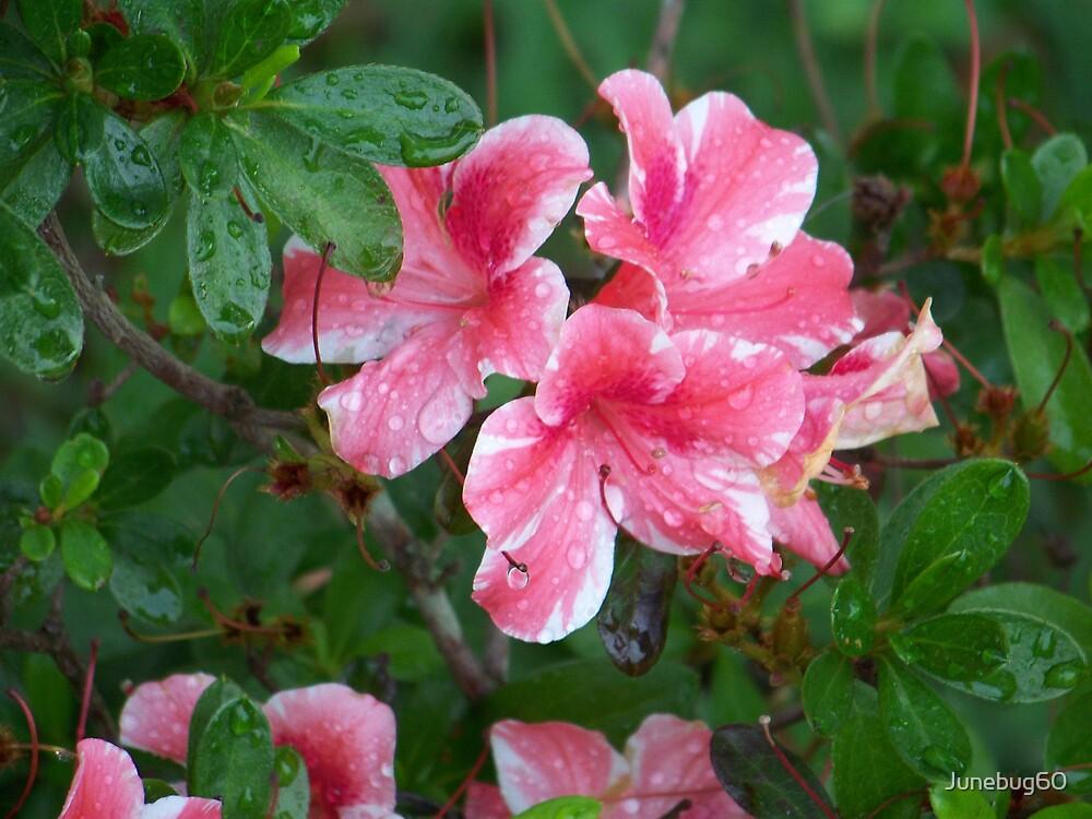 Pink Paradise by Junebug60