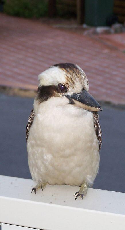 bird by mikeiscoolstar