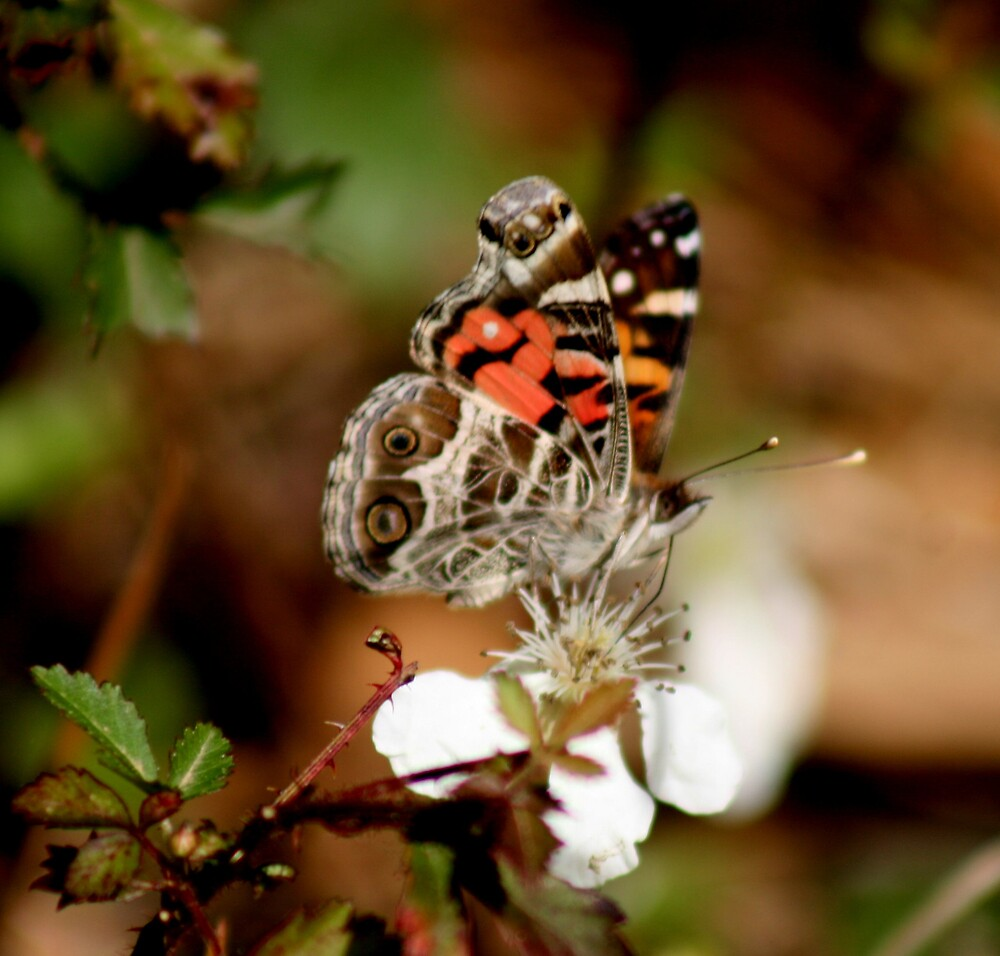 Butterfly by Stephanie  Taylor