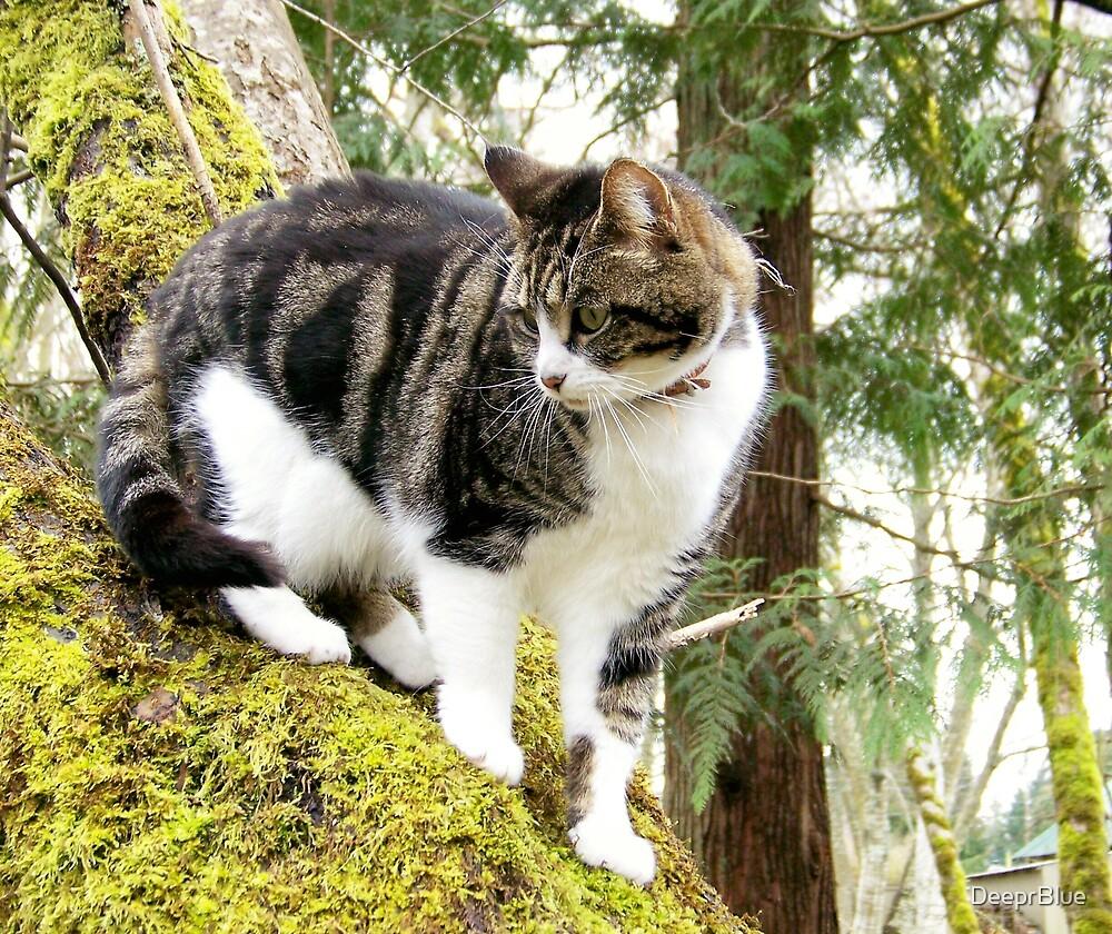 The Reason Cats Climb by DeeprBlue