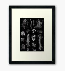 Lámina enmarcada Impresión de la anatomía del vintage