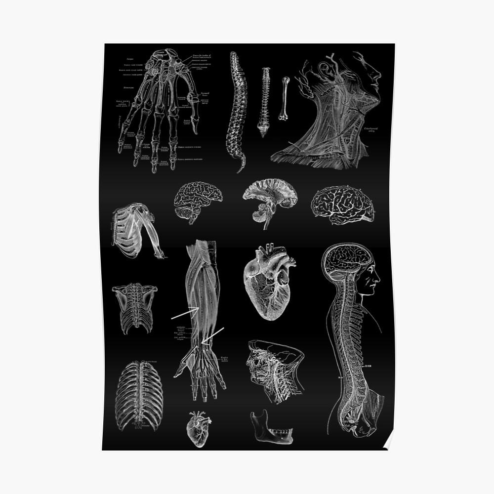 Vintage Anatomie Print Poster