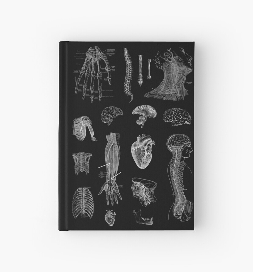 Vintage Anatomy Print  by StilleSkygger