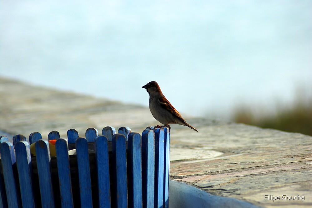 bird by Filipe Goucha