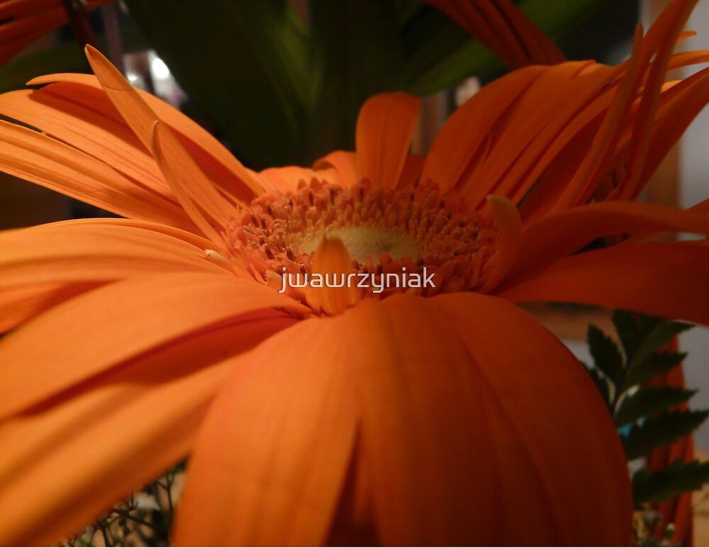 Orange Petals by jwawrzyniak