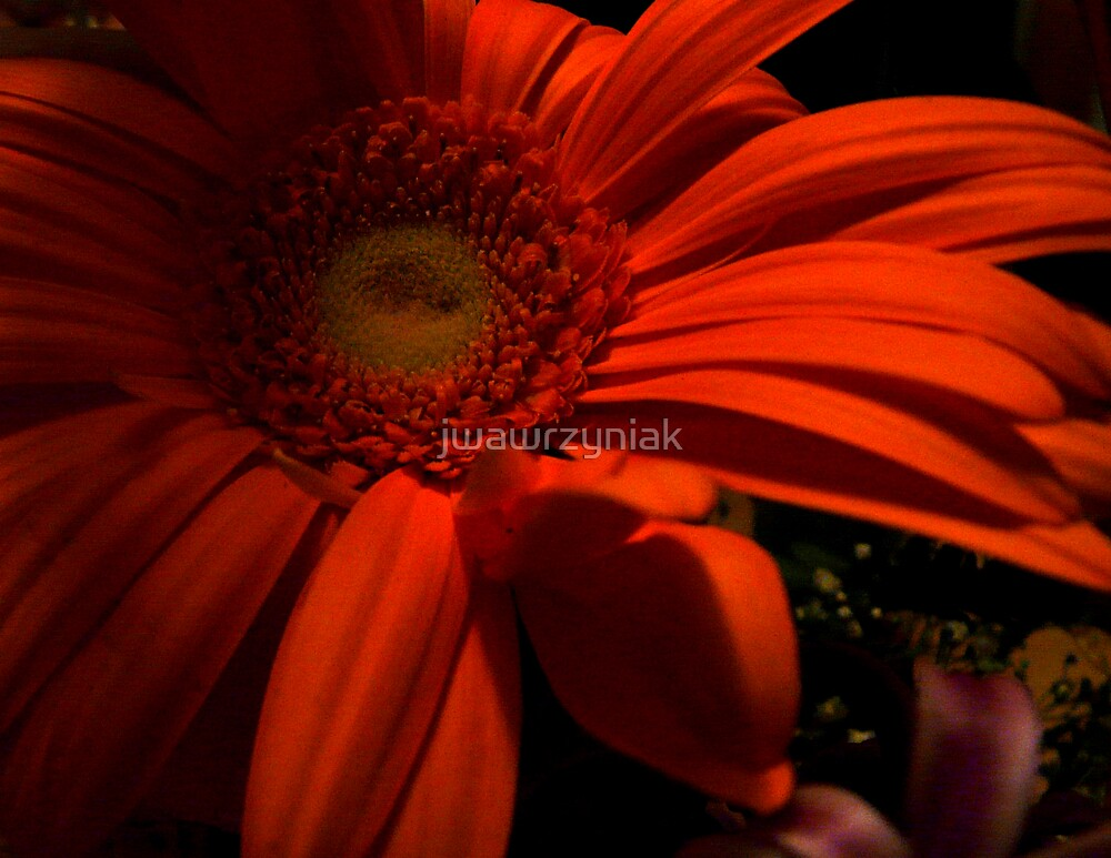 Orange Petals 02 by jwawrzyniak