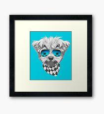 Cool Maltese Poodle Framed Print