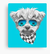 Cool Maltese Poodle Canvas Print