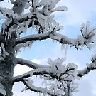 Freezing Tree by Tim Yuan